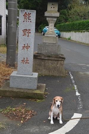20181012松沢熊野神社02