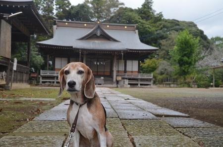 20181012松沢熊野神社11