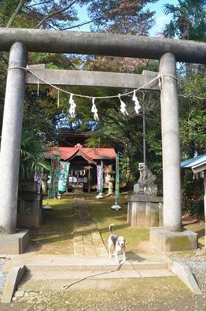 20181105富里香取神社02