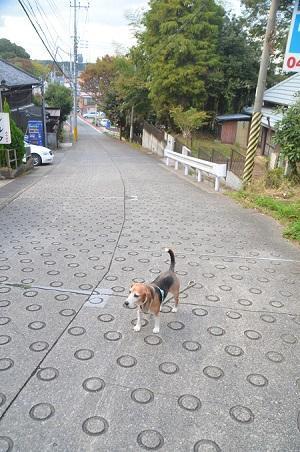 20181105海隣寺坂18
