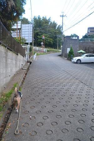 20181105海隣寺坂15