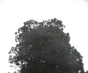 20181109妙見神社18