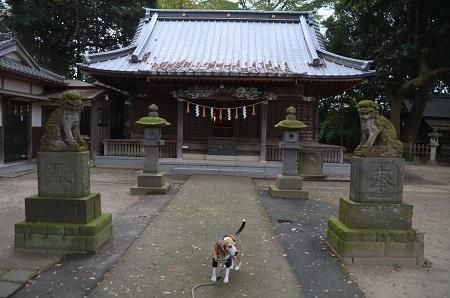 20181119土浦八坂神社11
