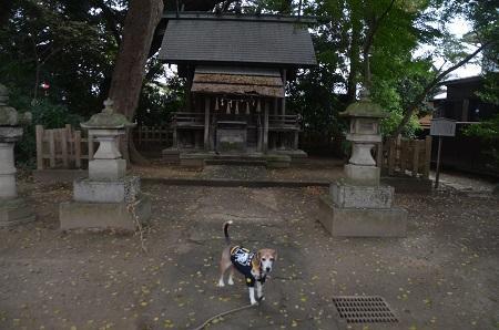 20181119土浦八坂神社23