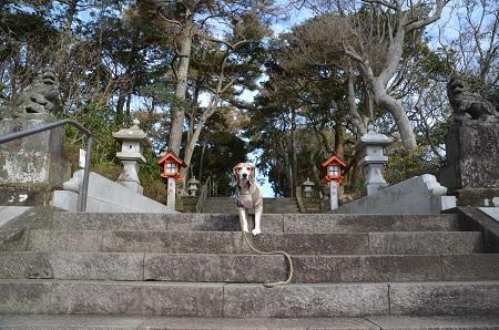 20181219鶴峰八幡神社03