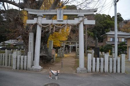 20181211素鵞熊野神社03