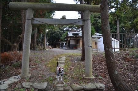 20181211素鵞熊野神社45
