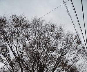 20181211素鵞熊野神社05
