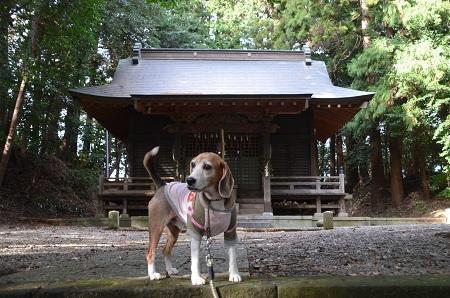 20181219八雲神社06