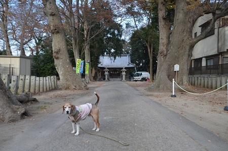 20181220土浦八坂神社03
