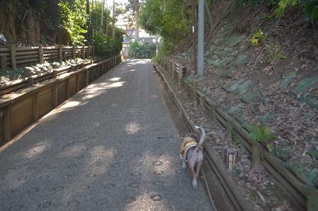 20190107くらやみ坂09