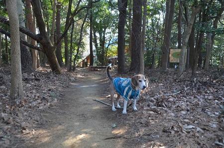 20190120愛宕山公園21