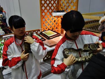 爬虫類姉妹