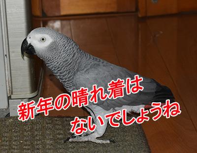 5_晴れ着