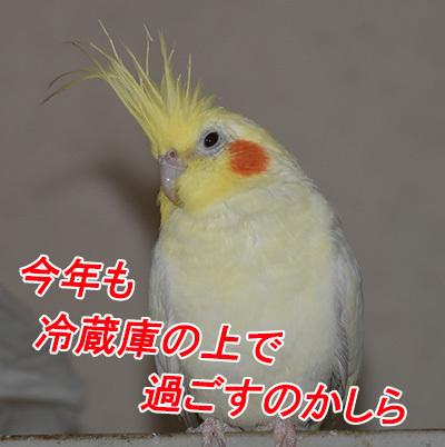 1_ノンちゃん