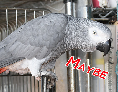5_maybe
