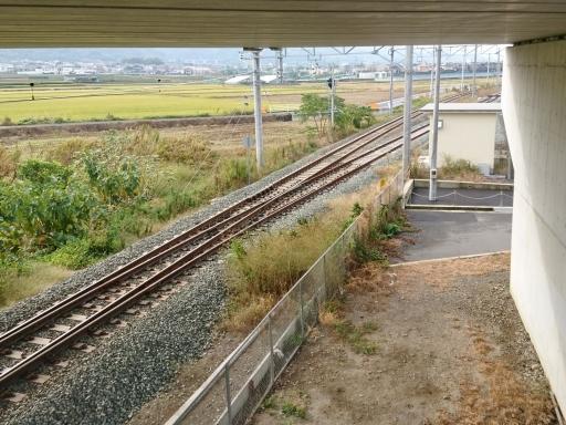 matsuyama6 (4)
