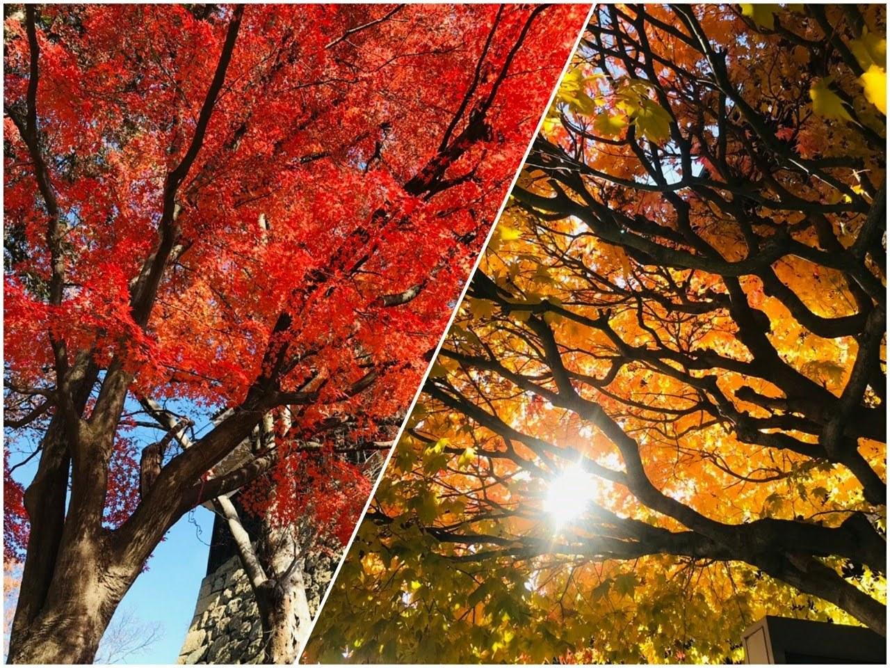 18-12-03-08-58-35-224_deco-1280x960.jpg