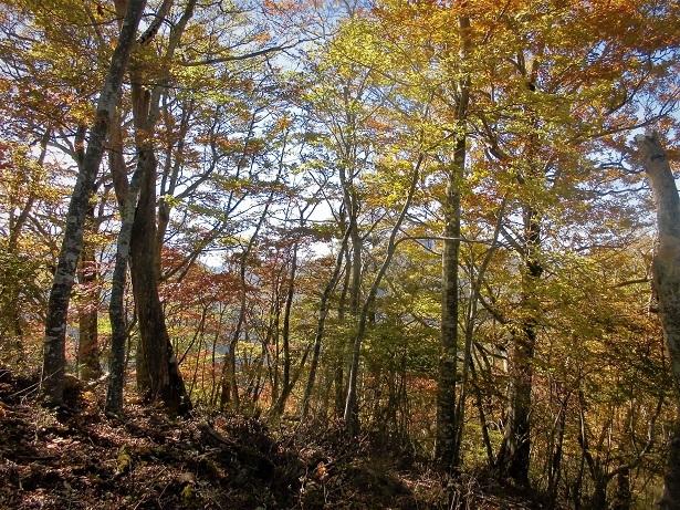 18.10.24 鶴ヶ鳥屋山ハイク (36)