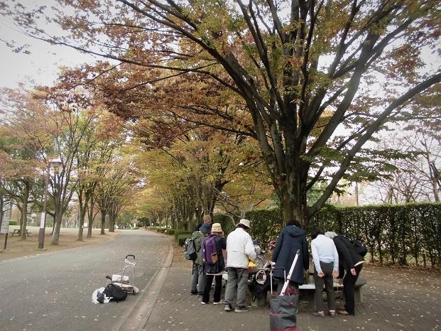 18.11.19 絵の教室三橋運動公園 (54)