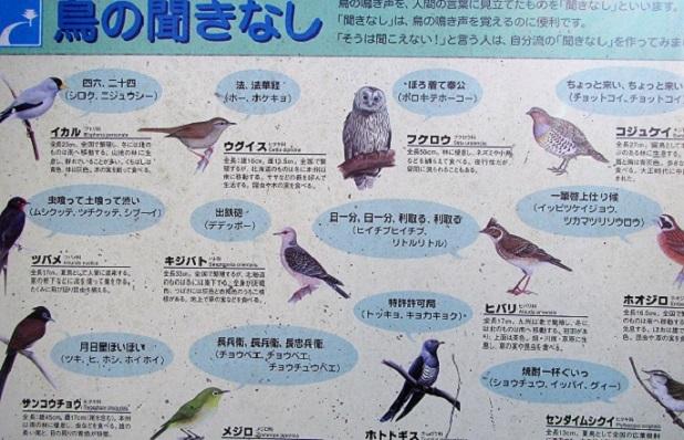 19.1.11 高根山~鐘撞堂山 (17)