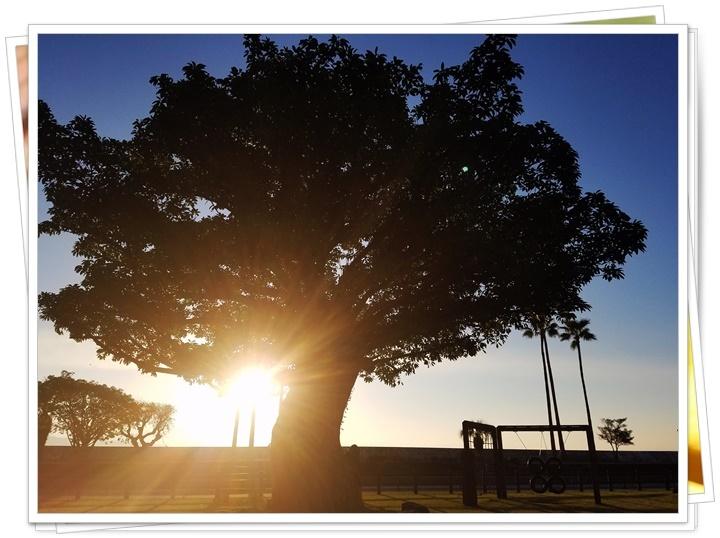 秋の朝陽1-1