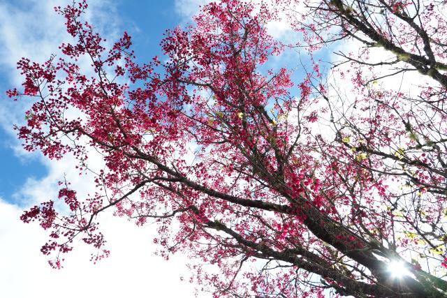 一足早い春(2)