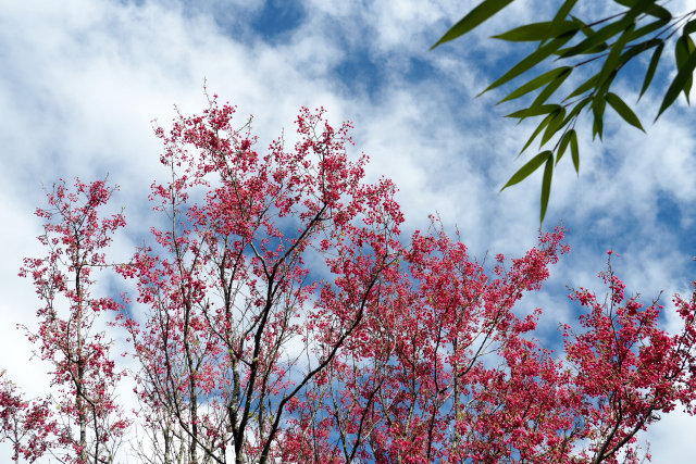 一足早い春(1)