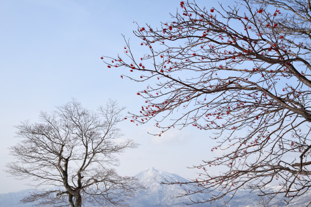 支笏湖(3)