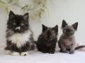 190203_kittens-1