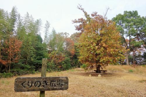 くりの木広場