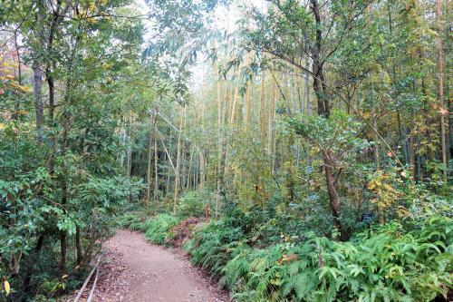 マダケの森