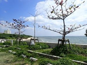 海岸parking