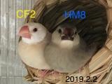 CF2 HM8