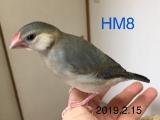 HM8 52日目