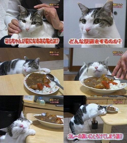 カレーの匂いにとろけてしまう猫