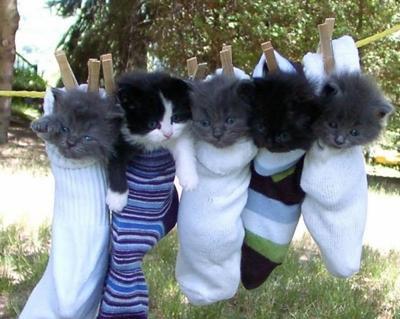 靴下に入って干される子ネコ