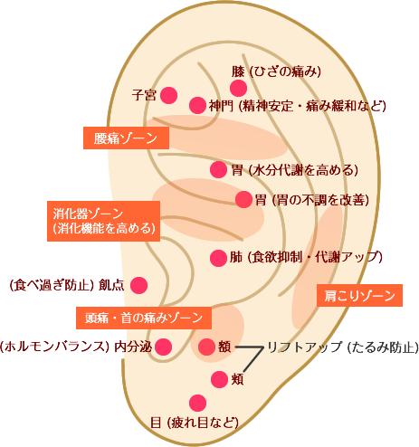 ear_illust-1 (1)
