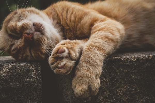 cat-3623703_960_720.jpg