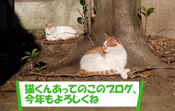 「猫くんあってのこのブログ、今年もよろしくね」