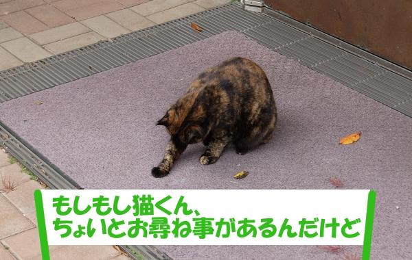 「もしもし猫くん、ちょいとお尋ね事があるんだけど」