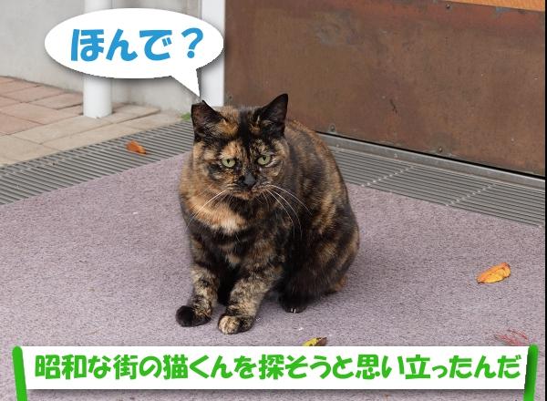 ほんで?「昭和な街の猫くんを探そうと思い立ったんだ」
