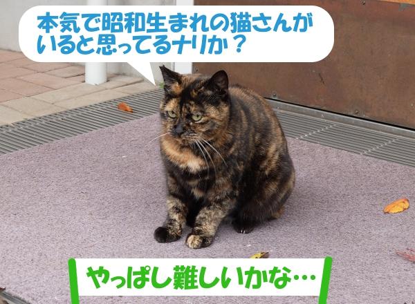 本気で昭和生まれの猫さんがいると思ってるナリか?「やっぱし難しいかな…」