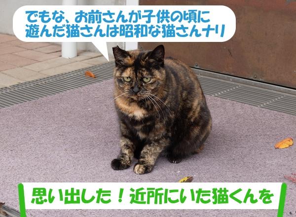 でもな、お前さんが子供の頃に遊んだ猫さんは昭和な猫さんナリ「 思い出した!近所にいた猫くんを」
