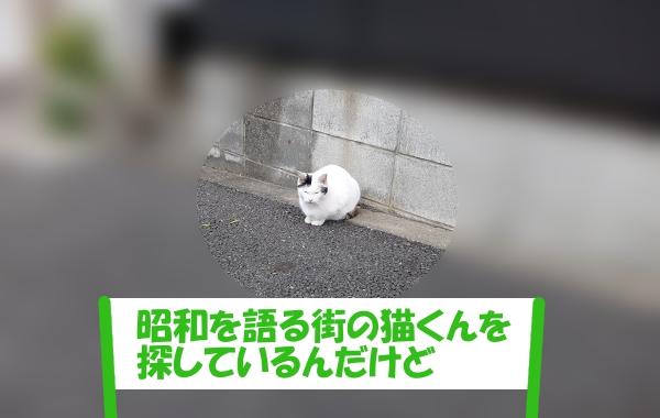 「昭和を語る街の猫くんを探しているんだけど」