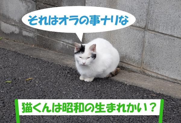 それはオラの事ナリな 「猫くんは昭和の生まれかい?」