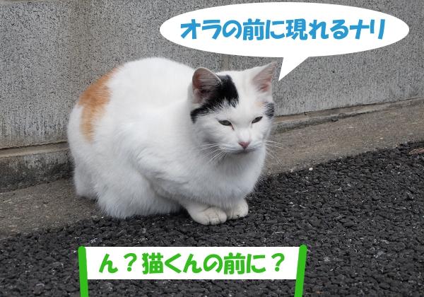 オラの前に現れるナリ 「ん?猫くんの前に?」