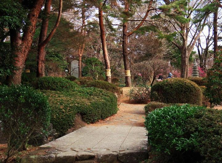 庭園-676