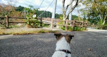 江汐湖橋1
