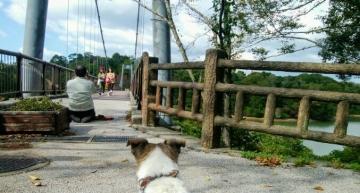 江汐湖橋2